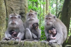1-cahya-monkey-forest