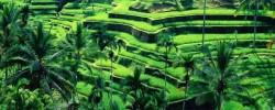 4-bali-driver-seminyak-ubud-rice-terrace-tour-e1504963074239