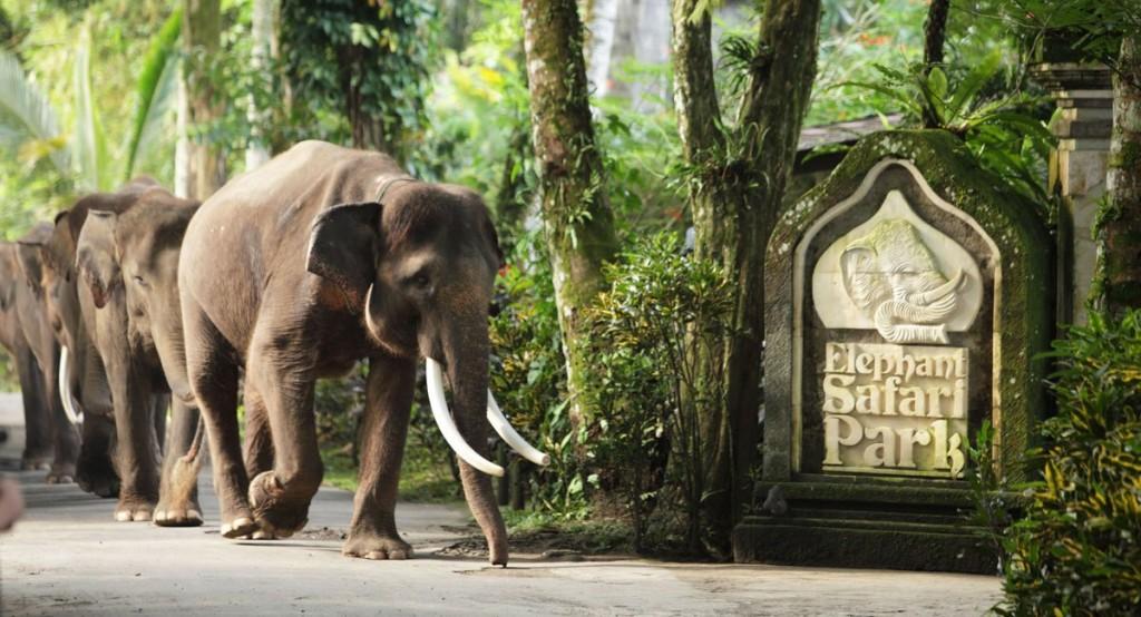balielephantsafaripark