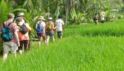 trekking-sawah